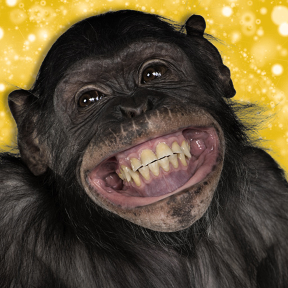 gifts occasions funny chimp blank card